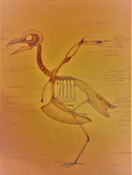 Bird Anatomy Study by S4MMY4RT