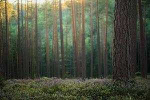 Forest 10 by fallen-cherubim
