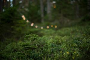 Forest 12 by fallen-cherubim