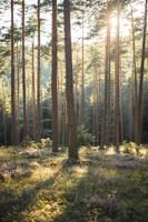 Forest 13 by fallen-cherubim