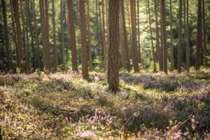 Forest 15 by fallen-cherubim