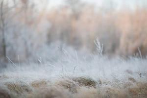 Frost 3 by fallen-cherubim