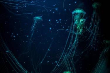 Underwater 3 by fallen-cherubim