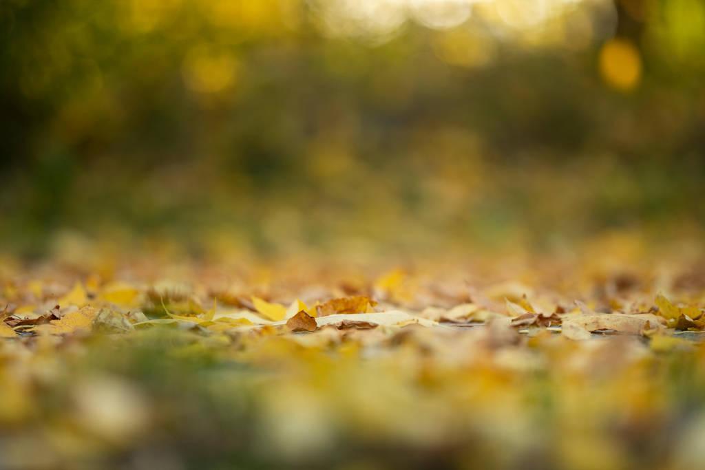 Autumn Floor by fallen-cherubim