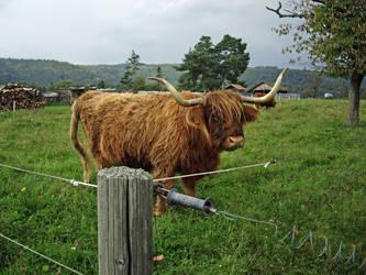 A Real Highlander :) by Malintra-Shadowmoon