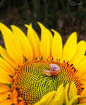 Little Snail by cristilaceanu
