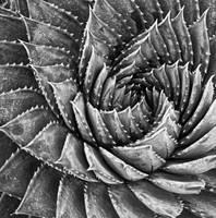 Fibonacci by DrGiancarlo