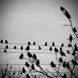birds. by liv-colour