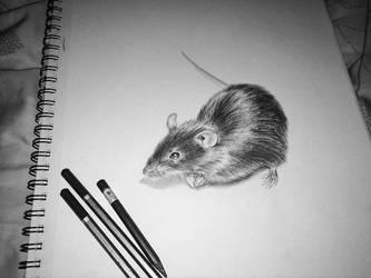 Rat by wendythewilf