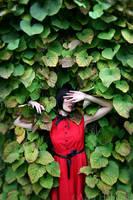 red rose 02 by enasni