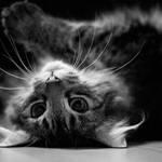 my cat XXVIII by thehomeboy