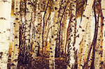 birch trees by AlexCarata