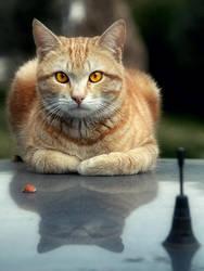 Catz R Nutz by toreoztok