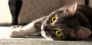 Cat's Odyssey by toreoztok