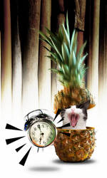 wake up cat in pineapple by dadocreator