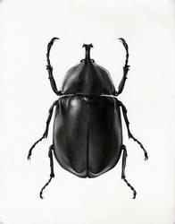 Scarab Beetle by MedIllin