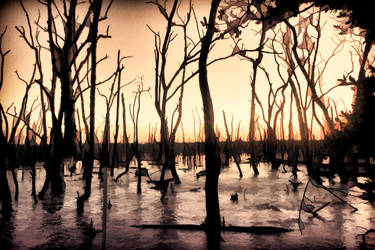 Swamp Background by SavageLandPictures