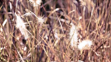 brown grass by Benijamino