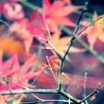Softly Fall III by McKenzie-James