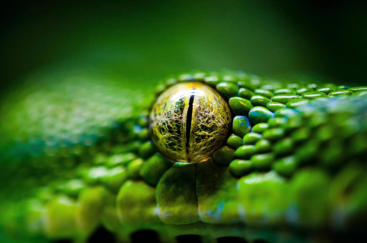 Eye of a killer by SIM0N2