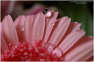 Shocking Pink by Hitomii