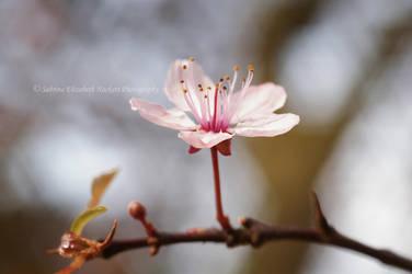 Elegant Simplicty by Hitomii
