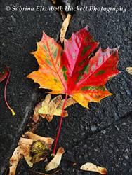 Wet Autumn by Hitomii