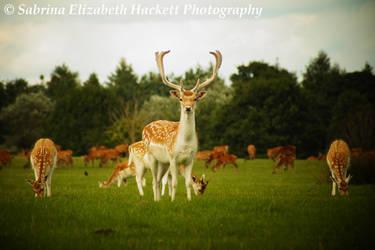 Deer Image One by Hitomii