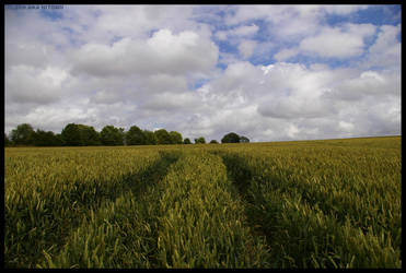Paths Through The Crops by Hitomii