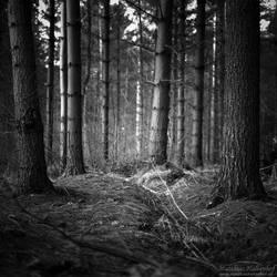 Forest Darkness 02 by MatthiasHaltenhof