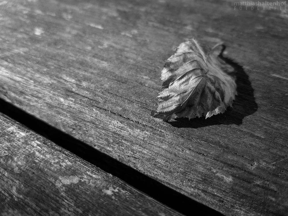 Leaf by MatthiasHaltenhof