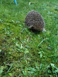The Hedgehog by Denbynator