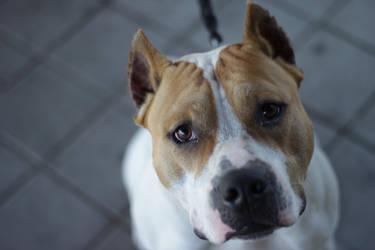 Cute dog by cosmin00