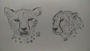 Cheetah practice - Revenge of Cheetah by kosko99