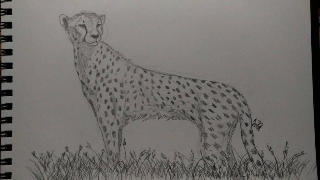 Monday cheetah by kosko99