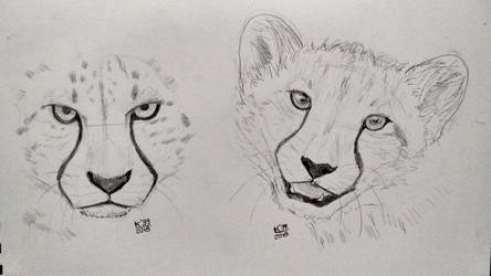 Cheetah practice - I once did draw a cheetah lion by kosko99