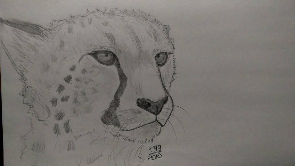 Cheetah  - This is my 11th cheetah! by kosko99