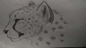 Cheetah practice - back after weeks! by kosko99