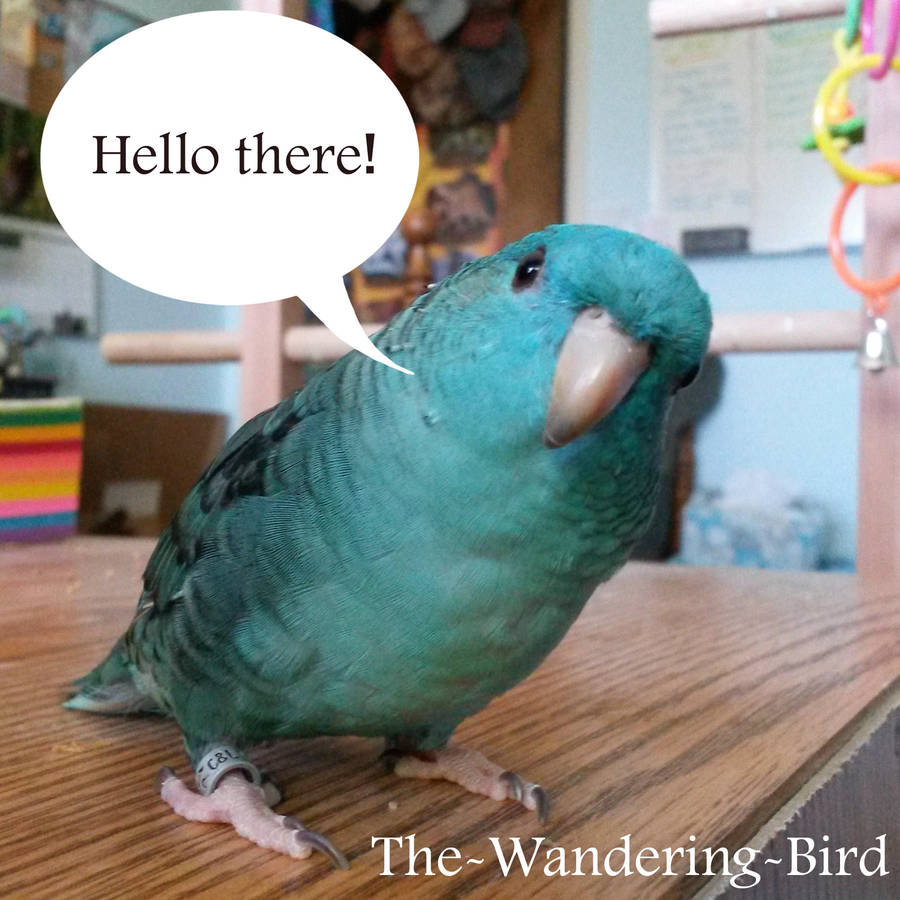 The-Wandering-Bird's Profile Picture