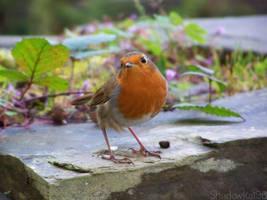 Rockin' Robin by shadowkat96