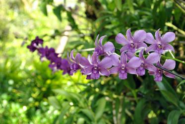 Maldives_35 by Abirvalg1989