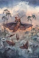 Noctuidae by ullakko