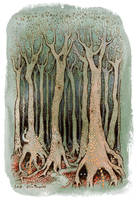 Tall Woods by ullakko