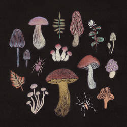Mushrooms by ullakko