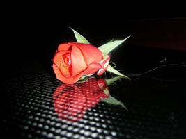 Red Rose on Carbon Fiber by ticklemeimsexy