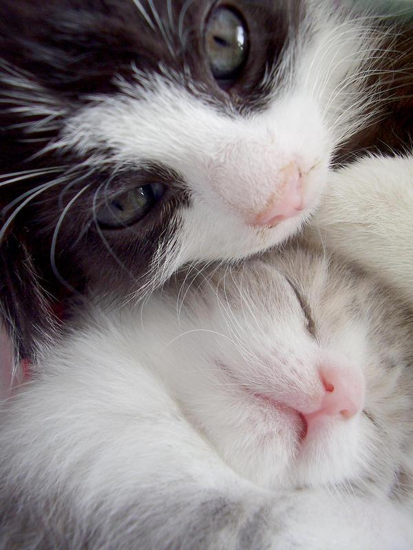 Kittens by michaela66