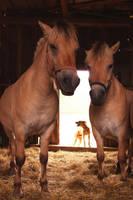 Horses and barking dog by michaela66