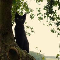 Black cat by michaela66