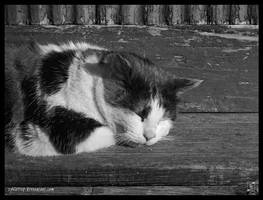 a good rest by Zyklotrop
