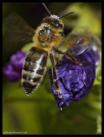buzz by Zyklotrop